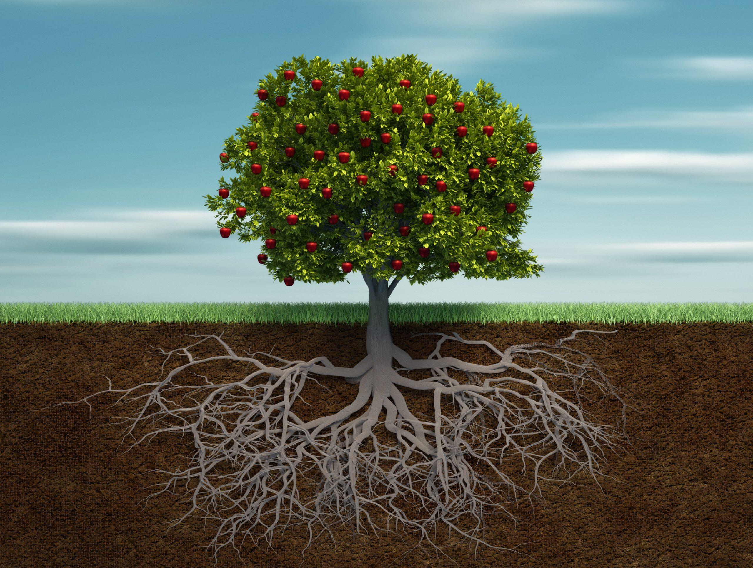 Baum mit Früchten